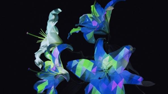 「Hana」MV (okmusic UP's)