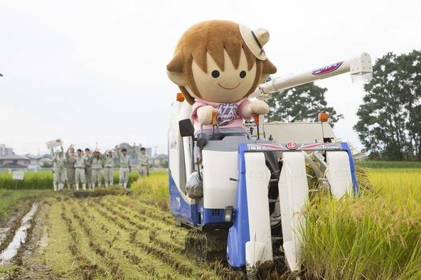 タボくんが湖南農高生と近江米新品種「みずかがみ」の稲刈り (okmusic UP's)