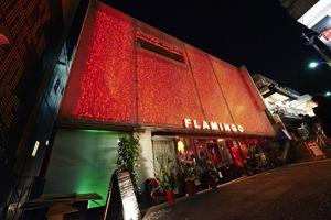 FLAMINGO (okmusic UP's)