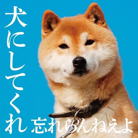 アルバム『犬にしてくれ』 (C)蔵之助 (okmusic UP's)